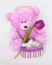 Teddy bear with tulip valentines day stock photos or mothers card cute purple teddybear flower and gift box Royalty Free Stock Photo