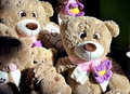 Teddy bears in the toy store window Stock Photo