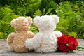 Teddy bears two and red roses Royalty Free Stock Image