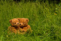 Teddybear couple sitting in the grass Stock Photos