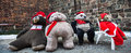 Teddybear four huge bears dressed as santa Stock Photography