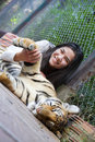 Teen girl playing with tiger cub inside cage biracial sleeping in thailand Stock Image