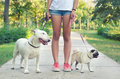 Teenage girl walking pet dogs, pug dog and bull terrier in park Royalty Free Stock Photo