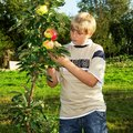 Teenager in apple orchard Royalty Free Stock Photo
