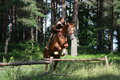 Teenager girl jumping over the fence with horse in forest Stock Image