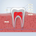 Teeth or dental illustration Royalty Free Stock Photo