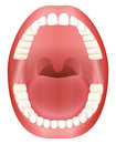 Teeth Open Mouth Adult Dentition Royalty Free Stock Photo