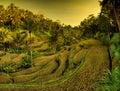 Tegallalang rice fields. Ubud - Bali - Indonesia