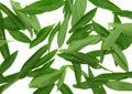 Tekstury background- zieleni liść. Obrazy Royalty Free