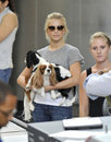 Television star Julianne Hough with dogs at LAX Stock Images