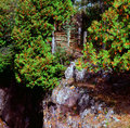 Temperance river bluff minnesota scenic autumn vista of rock faces and lush green foliage astride the in state park Royalty Free Stock Image