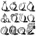 Temperate fruits sketch drawing set on white Stock Photos