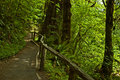 Temperate rain forest Stock Photos