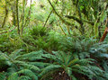 Temperate rain forest with fern fiordland national park south island new zealand Royalty Free Stock Images