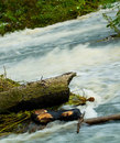 Tempestuous mountain river washes a fallen tree trunk Royalty Free Stock Photos