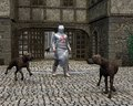 Templar Knight and Guard Dogs at a Castle Gate Stock Photo