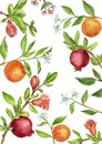 Template with fruit tree branches, leaves, flowers and berries