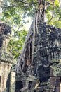 Temple in angkor thom cambodia ruins tropical forest Royalty Free Stock Photography