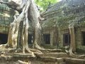 Temple Angkor Wat Royalty Free Stock Image
