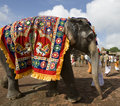 Temple Elephant - Thanjavur - India Stock Images