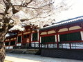Temple in japan sakura Stock Photography