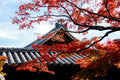 Temple roof with japanese maple tree in foreground autumn japan Royalty Free Stock Photography