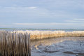 Temporary dam by using bamboo wood for prevent wave erode land in seacoast Royalty Free Stock Photography