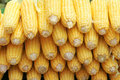 Tender corn cobs Royalty Free Stock Photo
