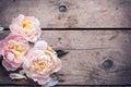 Tender Pink Peonies Flowers On...