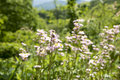 Tennessee Flowers Royalty Free Stock Photo