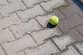 Tennis ball in a water pool on paving slabs in a sunny day Royalty Free Stock Photo