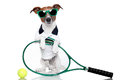 Tennis dog Stock Images