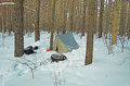 Tent in winter the snow covered forest russia Royalty Free Stock Photography