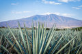 Tequila Landscape Royalty Free Stock Photo