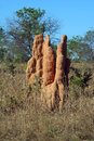 Termite hill Royalty Free Stock Photo