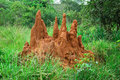 Termite mound Royalty Free Stock Image