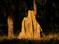 Termite mound in bardia national park nepal Stock Photography