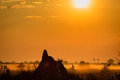 Termite mound dominates scene at sunrise in grasslands of okavango delta botswana africa Stock Photo