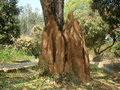 Termite mound huge or termitaria Royalty Free Stock Photo