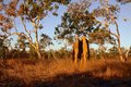 Termite mound massive in northern territory australia Stock Images