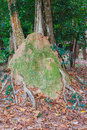 Termite mound in the park of Si Sa Ket, Thailand Stock Photo