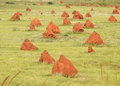 Termite mounds onslow western australia spinifex Royalty Free Stock Image