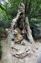 Termite nest Royalty Free Stock Photo