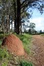 Termite Nest Australia Royalty Free Stock Photo