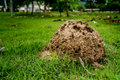 Termite nest in the park Royalty Free Stock Photo