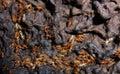 Termites Stock Image
