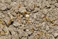 Termites Colony Stock Photos