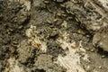 Termites Colony