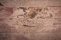 Termites eat wood floor the will be permitted thread does Royalty Free Stock Photo