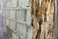 Termites erosion pole decay from destroy a brick wall in the background Stock Images